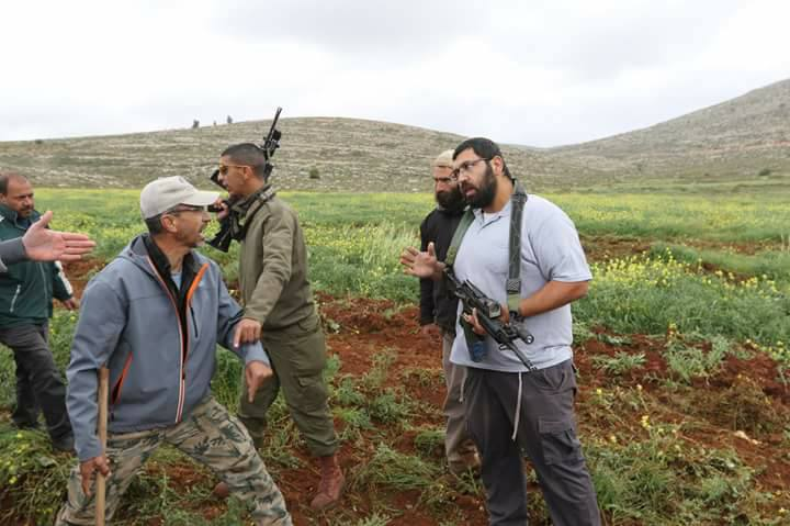 Israeli settlers cut down 20 olive trees in Ramallah