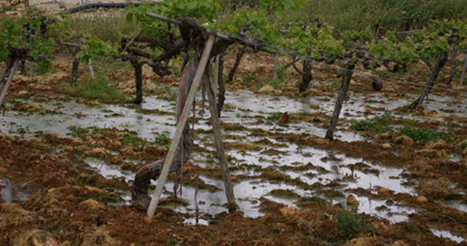 land destroyed by wastewater